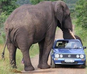 elephant-kid