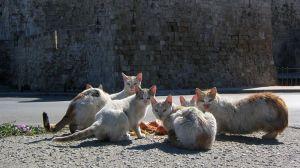 L'ère des chats